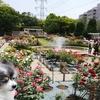 薔薇が見頃、総合レクリエーション公園