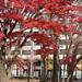 仙台上杉、勝山公園の紅葉が綺麗すぎだった!(2020年11月)