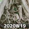 週報 2020W19