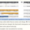 haplotype-awareなVCFのアノテーションを行う BCFtools/csq