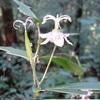 高尾 『秋の花』 景信山~一丁平~高尾