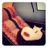 座椅子の円座の猫