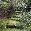 【京都】早春の大河内山荘で緑を楽しむ