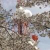桜狩(5)