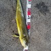 7月の釣り物