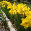 春の畑〜 ジャガイモ植え付け完了