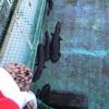 プールがオオサンショウウオの園!名張市郷土資料館②