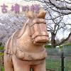 【埼玉】満開の時に行きたかった・・。埼玉古墳の桜たち。