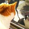 続報・外猫と愛猫の日々
