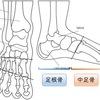 足部・足趾の骨の構造