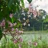 「シーナコンクアンカン公園」in「バーン・カチャオ」~自然保護区、都会のオアシスに暫し癒される!!