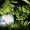 牧野植物園のヒスイカズラにびっくり♪