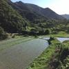 小豆島旅行の話⑥ 中山千枚田