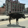 ネパールから。カトマンズの風をお届けします!
