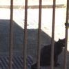 バリア黒猫