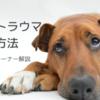 犬のトラウマ克服方法