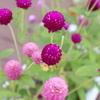 道の駅 舞ロードIC千代田、夏の花たち