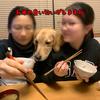 母ちゃんのご飯を横から盗み食いしようとタイミングを見計らっているゴールデンレトリバー