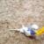 【ここすけの日常】インコと洗濯ばさみで遊ぶとこうなる!編【budgerigar】