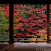 古谷の京都紅葉風景まとめ2019