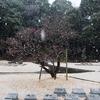 霊園風景 その48  「‥新雪の朝」