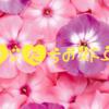 2021年6月発売乙女ゲーム