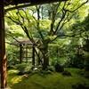 【京都】【御朱印】おすすめ‼妙心寺塔頭『桂春院』に行ってきました。 京都庭園 女子旅 京都隠れ家