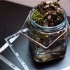 【おしゃれな小型水槽を作る】レトロな瓶で小さなアクアリウムを作ってみました