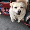 北京の胡同で出会う、胡同ワンちゃんの表情に癒される