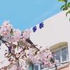 札幌の新学期がスタートしました