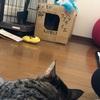 オンナの戦 Part23 ~ネコ飼い~