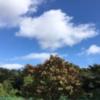 久しぶりの青空!(9月27日)