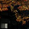 鎌倉紅葉2016 (安国論寺、妙法寺)