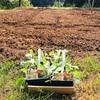 冬野菜の種と苗植え