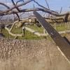 今日はイチジク畑の枝切り作業で体中筋肉痛です。