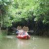 冬の沖縄旅行その9 「マングローブの森」はまちがい 慶佐次川(げさしがわ)でカヤック