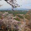 一目千本、憧れの奈良県吉野山の桜。