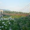 初夏の戸川公園