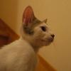 ハンドメイダー 猫を追い詰める