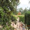 イベリア周遊の旅(93)アルカサルの庭苑。