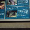 2018/8/15 メコン川に新展開!