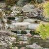 二条城清流園の池(仮称)(京都府京都)