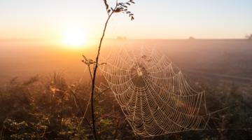 「クモの糸」が地球を救う? サステナビリティ時代における、企業と社会の向き合い方