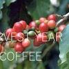 コーヒーの収穫年によって、香りが違ってくる