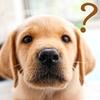 よくある質問【動物病院様向け】-ビデオ通話(相談・診療)について