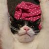 今日の黒猫モモ&白黒猫ナナの動画ー898