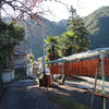 4回目で四郷の串柿と遭遇 和歌山県かつらぎ町