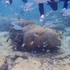 マリンクラブNagi (ナギ)でシュノーケリング!青の洞窟には行けなかったですが、、、〜人生初沖縄を満喫してきました!〜