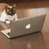 とにかく書け!  ブログで成功する方法