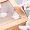 お花見におすすめの日本酒4選